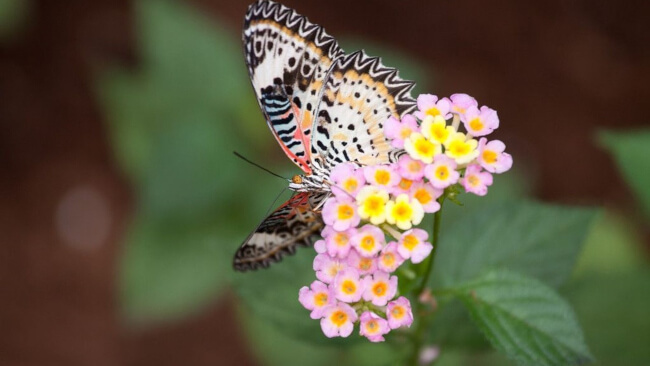 It's Time for the Hudson Butterfly Festival!
